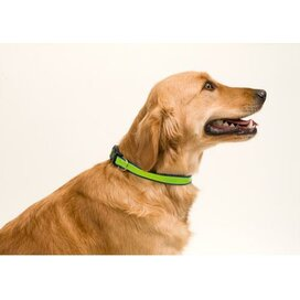 Reflecterende Pet Collar Muttley Blauw